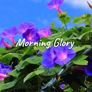 Morning Glory - Morning Manna #2710