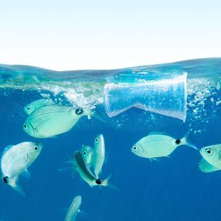 LifeGate PlasticLess approda nell'area marina protetta di Portofino