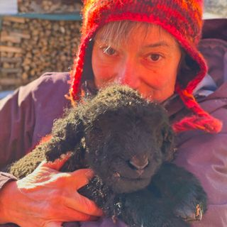 Robin The Lamb: A True Story Of Life And Death