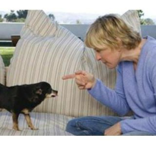 Animal Communication with #1 Pet Psychic Karen Anderson