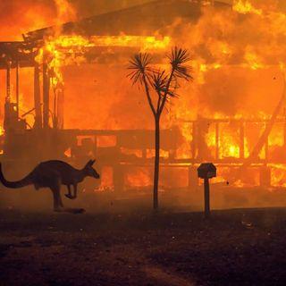 Avustralyada Orman Yangını Krizi