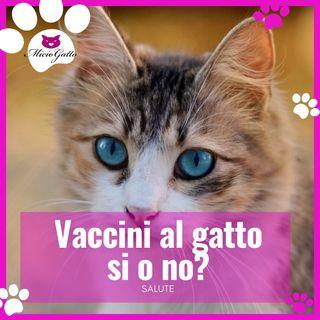 Vaccino per gatti, quando come e perché con la dott.ssa Beatrice Martinelli