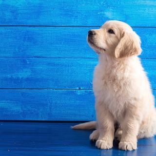 Podcast 2: 'Aiuto, il cucciolo fa i bisogni in casa!'