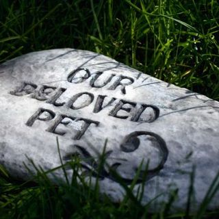 End of life decisions for animals