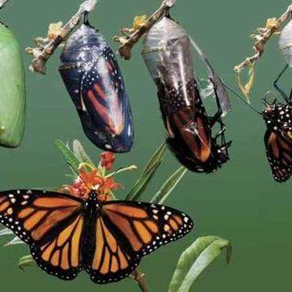 Los principios de la transformación #sersiendo