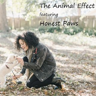 The Animal Effect featuring Honest Paws