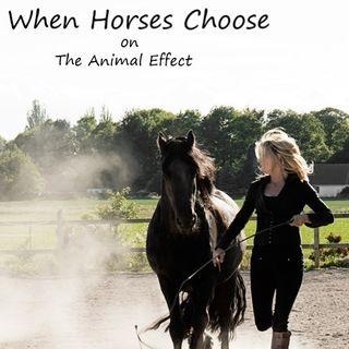 Animal Effect - When Horses Choose