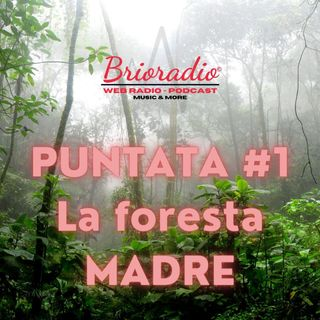 Brioradio - Puntata #1 - La foresta Madre