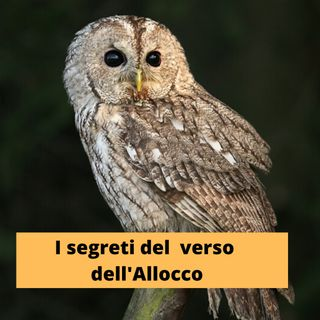 I segreti del verso dell'Allocco Episodio 2