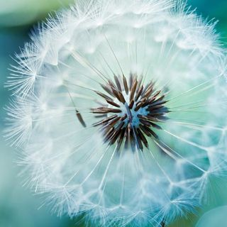 Meditazione: La respirazione spirituale