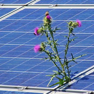 La fotovoltaica y los marcos regulatorios ! el charco #38