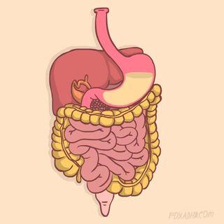 Capítulo 2. Fases de la digestión