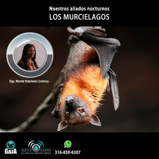 NUESTRO OXÍGENO Nuestros aliados nocturnos los murciélagos - Blga. Meriele Rebolledo Contreras