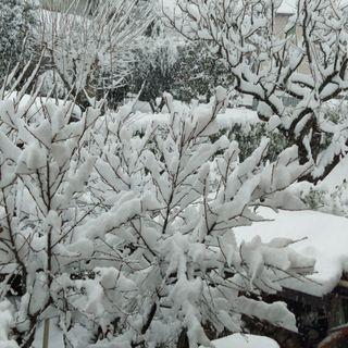 """Il Vicentino è """"zona bianca"""" da stanotte. Abbondante nevicata in corso (FOTOGALLERY)"""