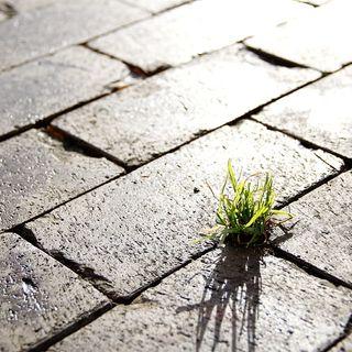 Come prima, più di prima. Il soil sealing fa paura