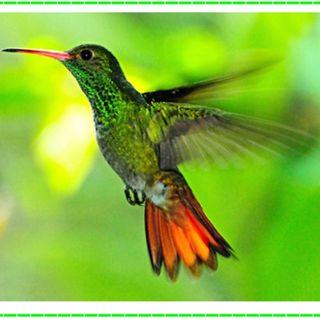 Tras Las Huellas de la Naturaleza.  Club de Aves: Observando al Colibrí