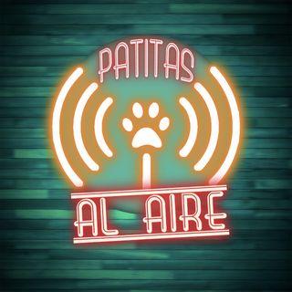 PATITAS AL AIRE - Como mejorar con tu perro en cuarentena.