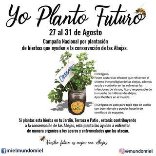 NUESTRO OXÍGENO  Yo planto futuro - Ing Marco Antonio Soto