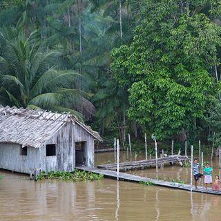 Il Brasile salverà l'Amazzonia... se pagano USA e Norvegia