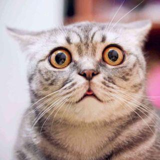 20074 - Martwy kot i wybory
