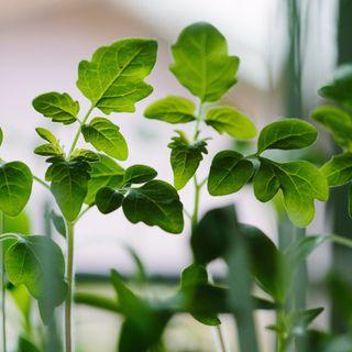 Coltivare le piante senza terra? Ce lo spiega Marco Divià