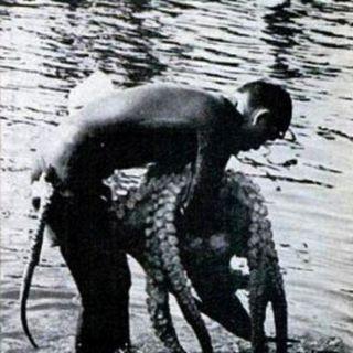 103 - Octopus Wrestling