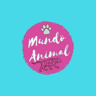 Mundo animal. Capitulo 1