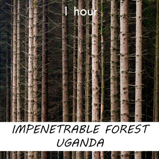 Impenetrable Forest Uganda | 1 hour FOREST Sound Podcast | White Noise | ASMR sounds for deep Sleep | Relax | Meditation | Colicky