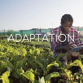 Adaptation - Morning Manna #