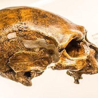 San Felice Circeo (Latina), ritrovati resti umani Neanderthal risalenti fino a 100.000 anni fa