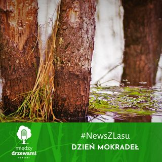 News z lasu - Dzień mokradeł