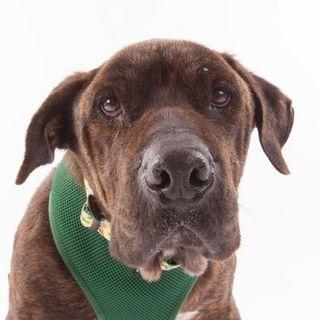 Sherri Franklin founder of Muttville Senior Dog Rescue