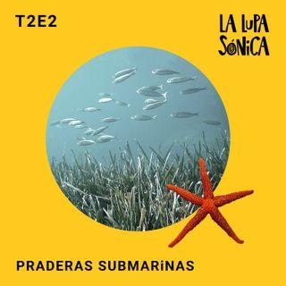 Praderas submarinas