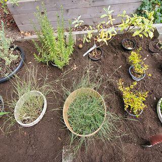 What is Heeling In Plants? - DIY Garden MinuteEp.169