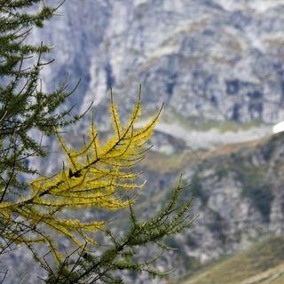 La trasfigurazione: tra la luce e la discesa