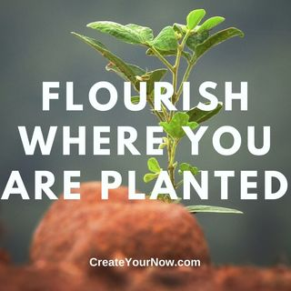 1891 Flourish Where You Are Planted
