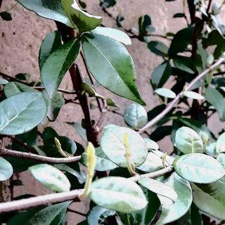 Il seme piccolino, cresciuto nel giardino