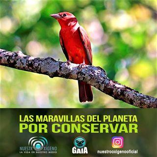 NUESTRO OXÍGENO las maravillas del planeta por conservar - Día mundial del medio ambiente 2021