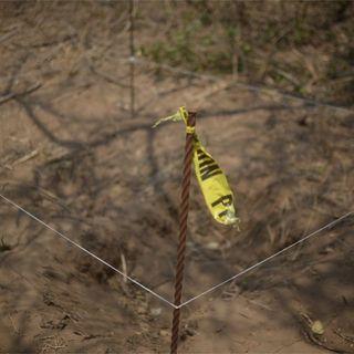 Colectivo reporta hallazgo de 18 cuerpos en fosas de Sonora