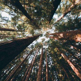 #bruxelles être en lien avec la nature