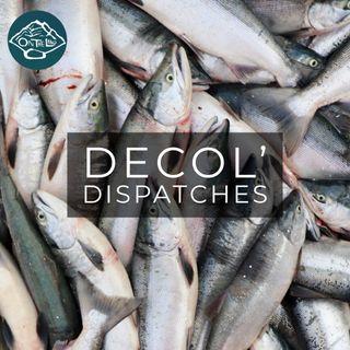 Decol' Dispatch: COVID19 x Salmon Season 2020 w/Scotty Savo