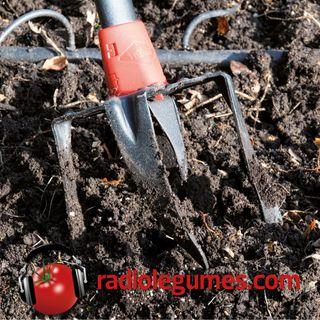 Comment planter un potager en pleine terre?