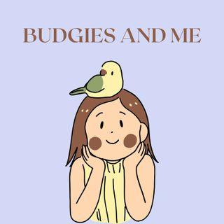 Budgies and Me