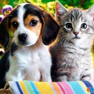 Anche gli animali si reincarnano?