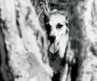 Ep #19 - Brazilian Cinema Novo in the 60s
