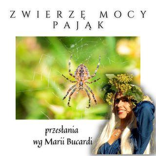 Zwierzę Mocy - Pająk - Przeznaczenie, los a cel duszy, sieć życia | Maria Bucardi