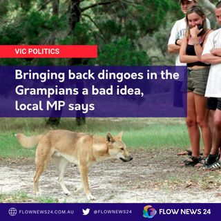 Bringing back dingoes in the Grampians - @LouiseStaleyMP / @LouiseStaley objects