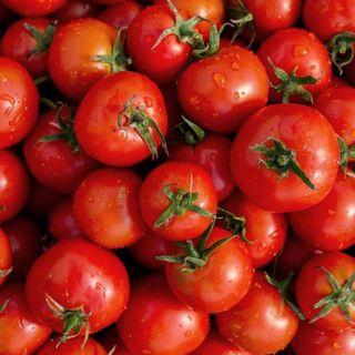 SE preocupada y decepcionada por la imposición de aranceles al tomate mexicano