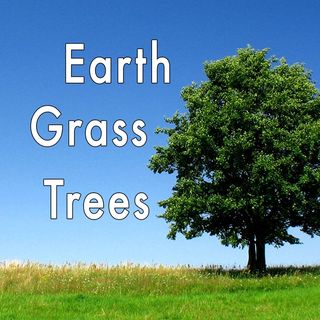 Earth And Trees, Genesis 1:9-12