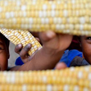 VolontariAmo | In Madagascar con Eva Hoffmann